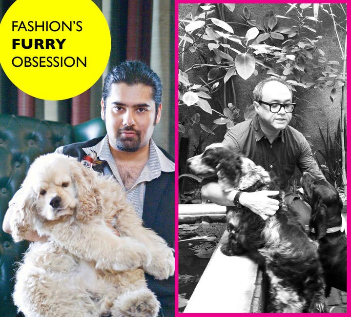 Fashion Furry Obsession