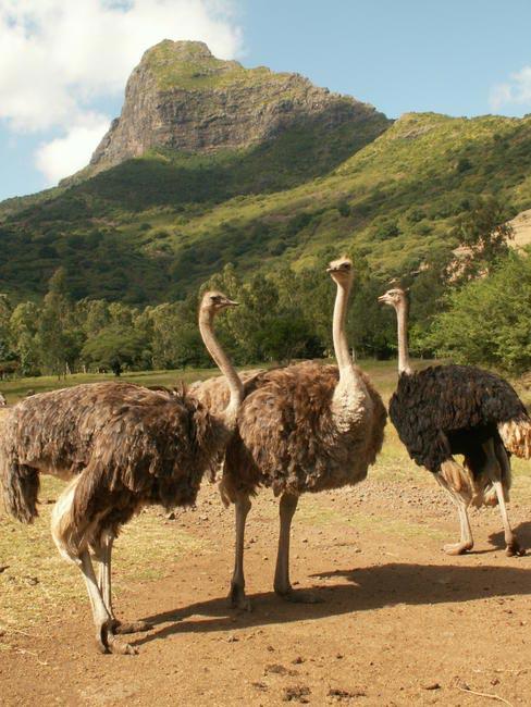 Casela Nature and Leisure Park, Picture Courtesy Mauritius Toursim Promotion Authority