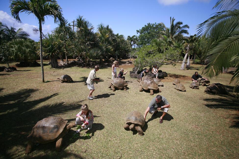 The Vanilla Crocodile and Tortoise Park, Picture Courtesy Mauritius Toursim Promotion Authority
