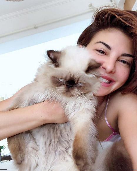 Jacqueline Cat