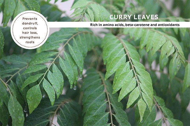 Curry Leaves For Hair Fall Treatments