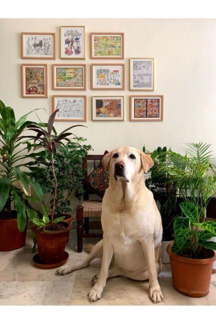 Plant parents