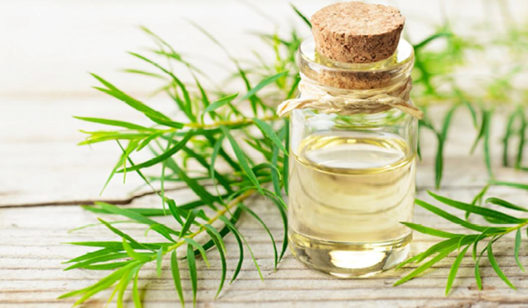 Brittle Nails Remedy Tea Tree Oil